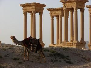 Palmyra - reibai