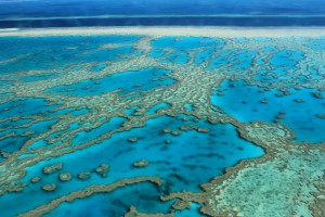 great barrier reef - one of the most endangered world heritage sites