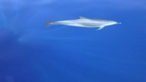 scuba dive dolphins