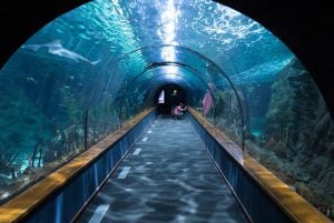 Face-scanning fish at Dubai airport will be in a tunnel like this one